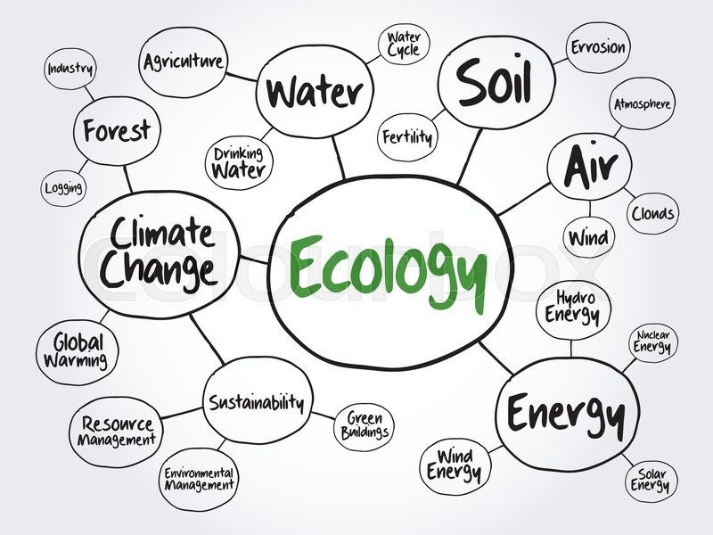 Ecology mind map flowchart concept for presentations and