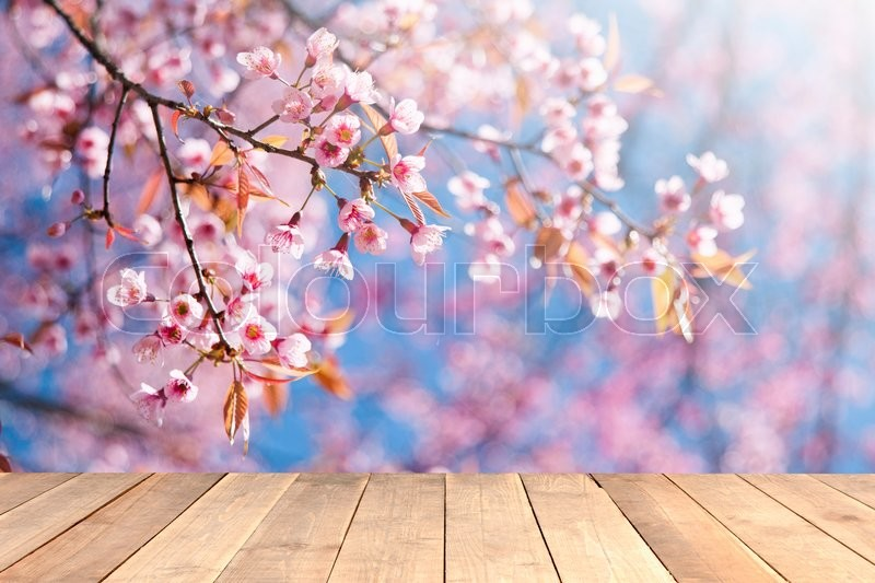 Blurred nature in sunny day backgrounds with old vintage