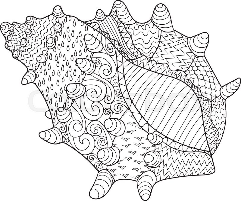 Seashell with high details. Adult antistress coloring page