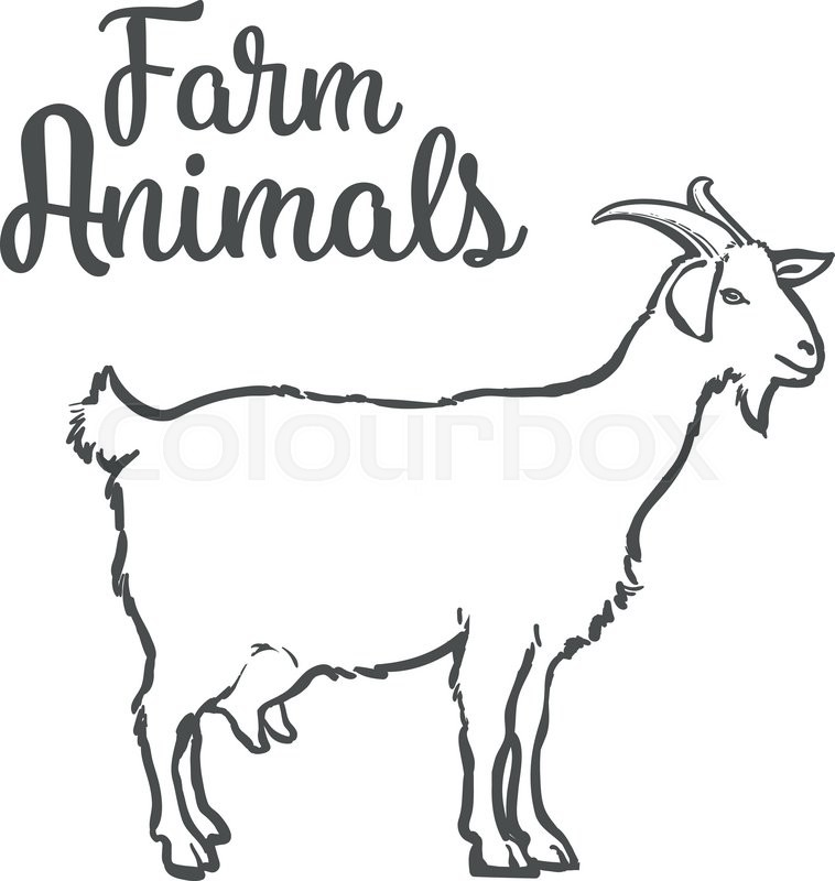 Farm pet goat sketch drawn by hand, cattle, milk and goat