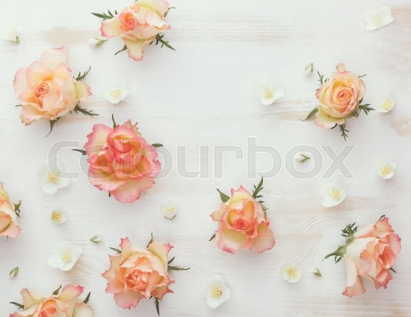 Rose and jasmine natural flower  Stock Photo Colourbox