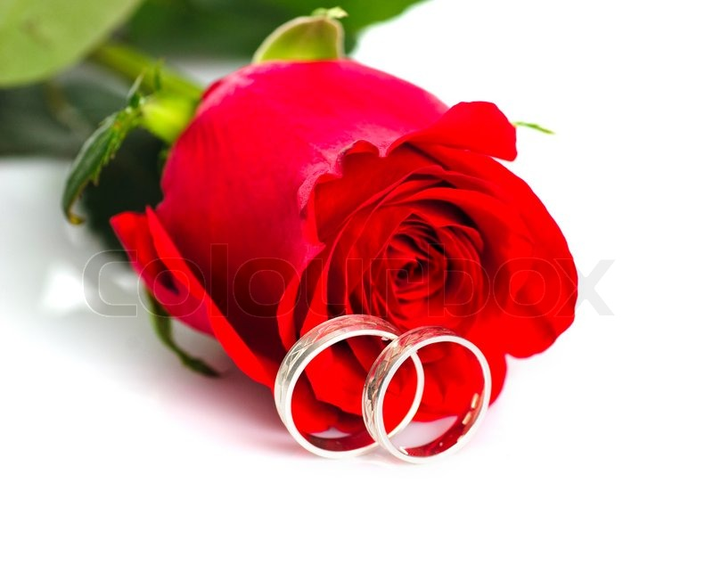 Red rose with silver rings on white   Stock image