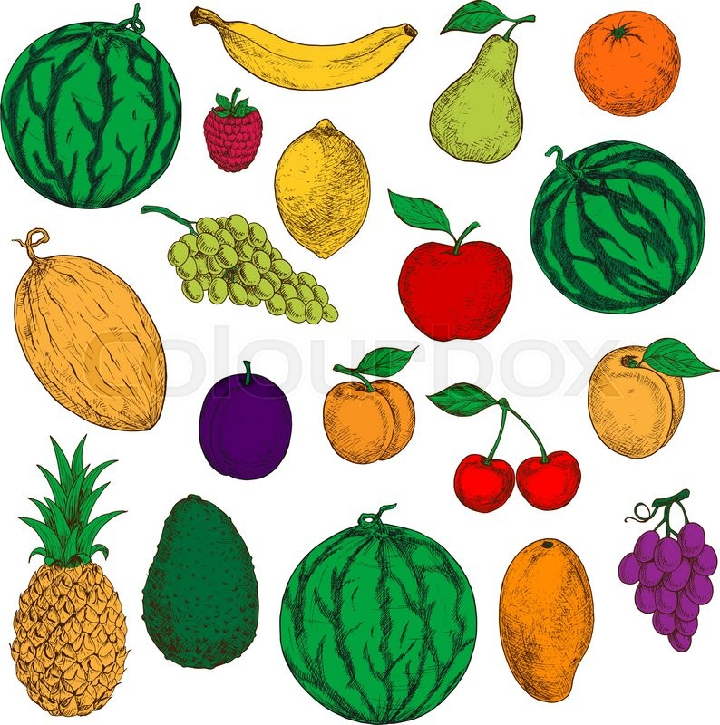 Colored Sketched Fresh Apple Orange And Mango Banana Lemon And Peach Green And Purple Grapes