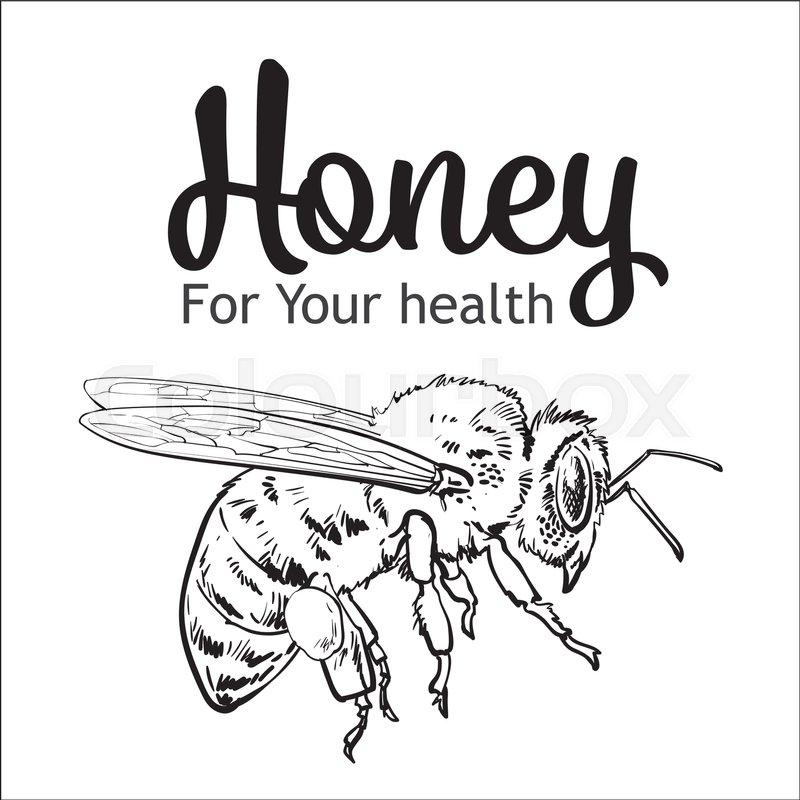 Bee Vector Drawing