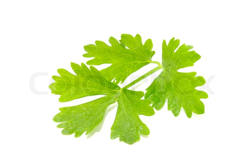 Celery Leaves Isolated on White Background  Stock Photo
