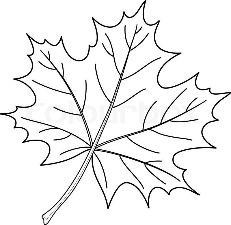 Leaf of a maple, nature symbol, monochrome vector