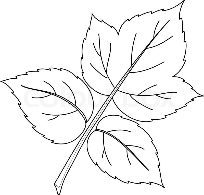 Leaf of raspberry, nature vector, monochrome, contours