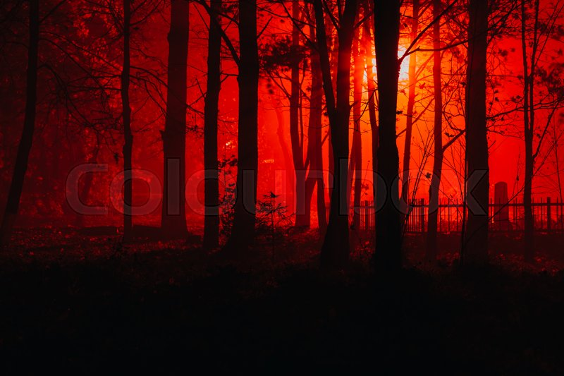 Scary Foggy Forest Silhouettes Of Trees In The Red Light