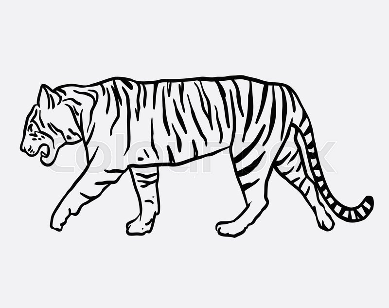 Tiger wild animal vector. Good use for symbol, logo, web