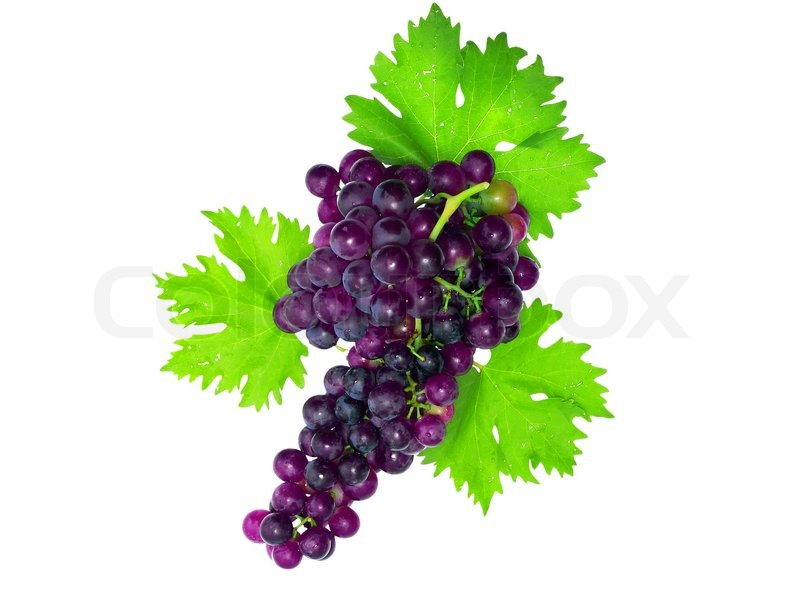 Branch Of Black Grapes With Green Leaf Isolated Over White