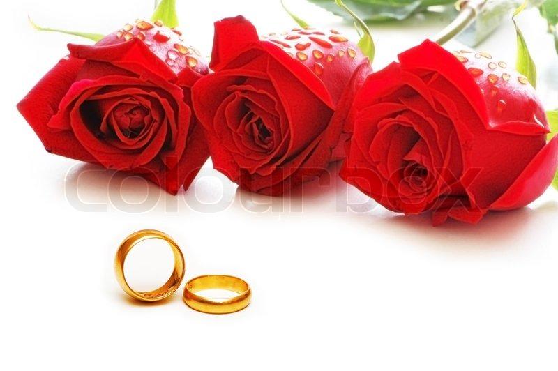 Drei Rosen und Ringe isoliert auf den weien  Stockfoto  Colourbox