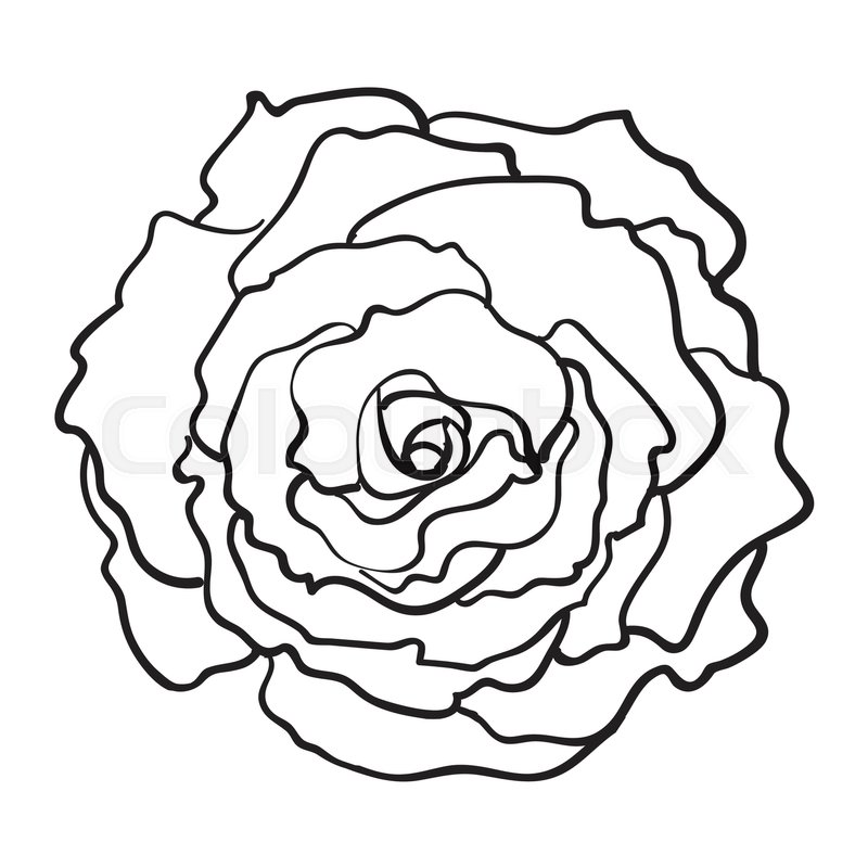 How To Draw An Open Rose Flower And Bud