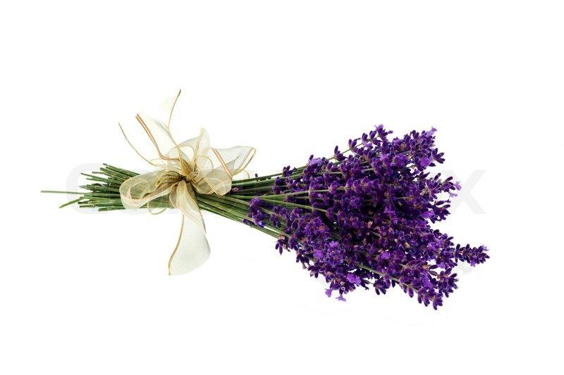Lavendelblten vor einem weien   Stockfoto  Colourbox