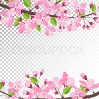 Cherry blossom background. Pink spring flowers frame ...