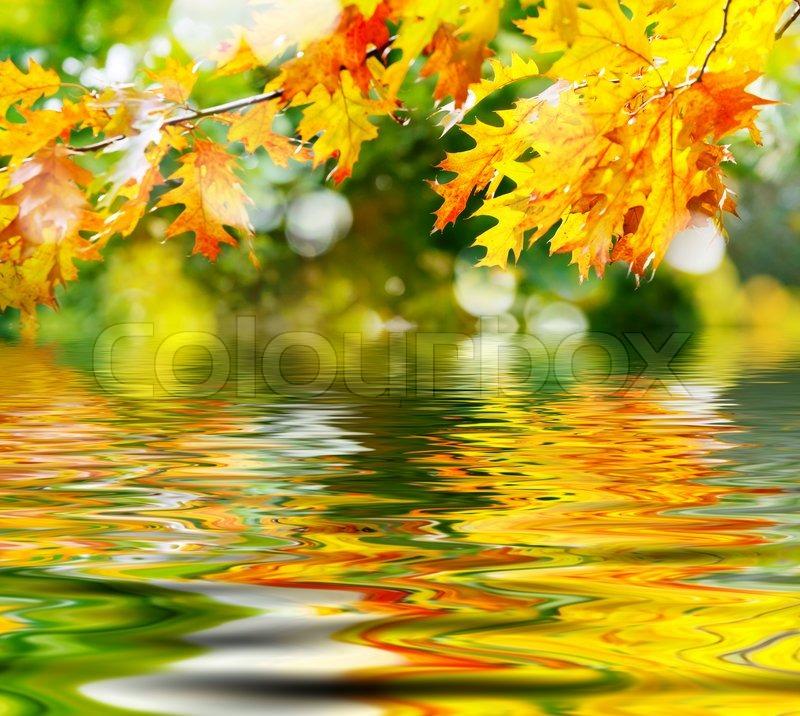 Fall Flowers Desk Background Wallpaper Bunte Bl 228 Tter Im Herbst Im Wasser Spiegelt Stockfoto