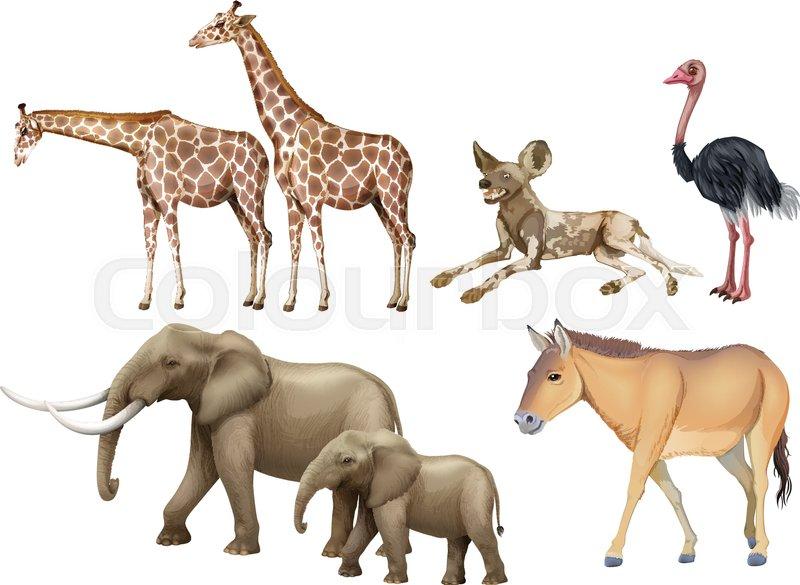 five types of wild