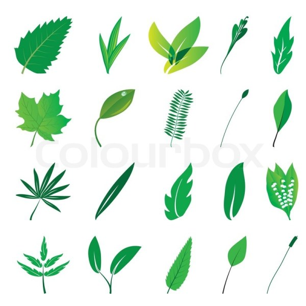 Collection Of Isolated Green Leaves Vector Illustration
