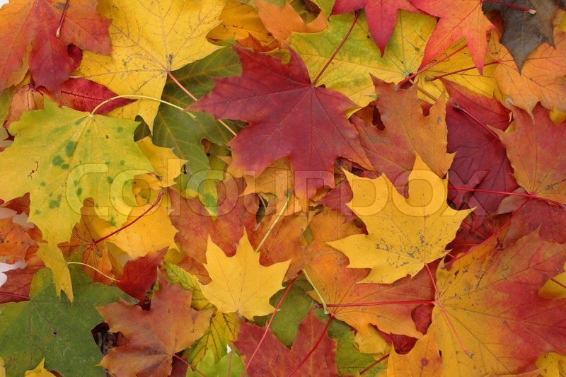 Free Fall Season Desktop Wallpapers Nice Autumn Color Background From Old Leaves Stock Photo