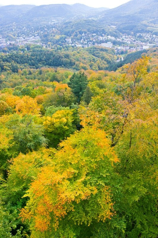 autumn landscape aerial view over