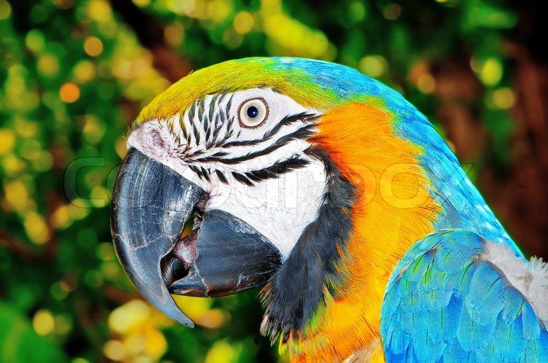 Bunte Papageien Vogel sitzt auf der Stange  Stockfoto