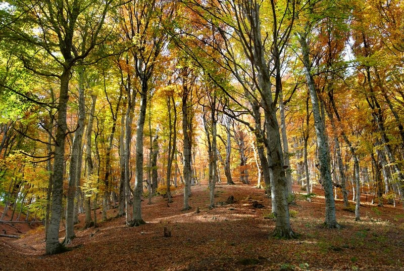 Free Fall Wallpaper Downloads Autumn Forest In The Warm Sunny Day Stock Photo Colourbox