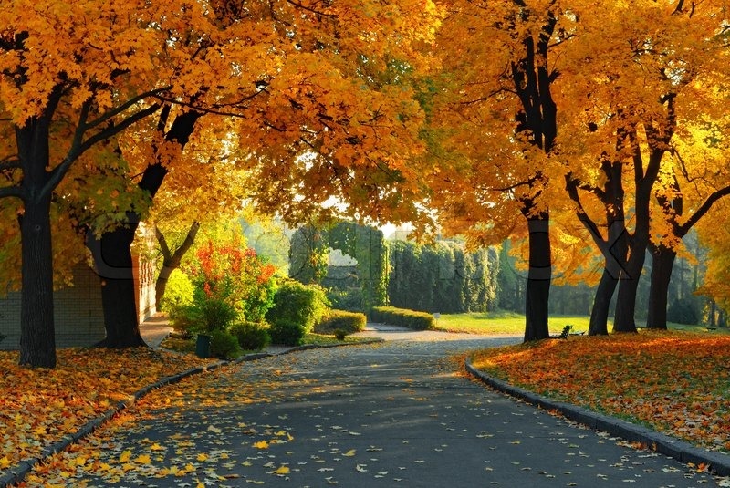 Fall Leaves Road Wallpaper Green And Yellow Trees In Park At Fall Season Stock