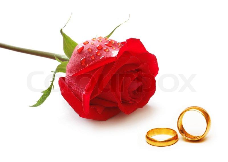 Hochzeit Konzept mit Rosen und Ringe  Stock Bild  Colourbox