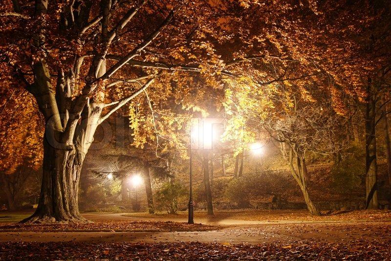 Bume im Park bei Nacht  Stockfoto  Colourbox