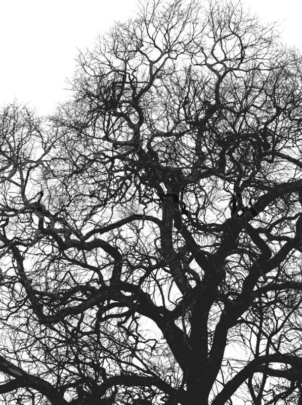 Dark Fall Wallpaper Big Tree Black And White Background Stock Photo Colourbox