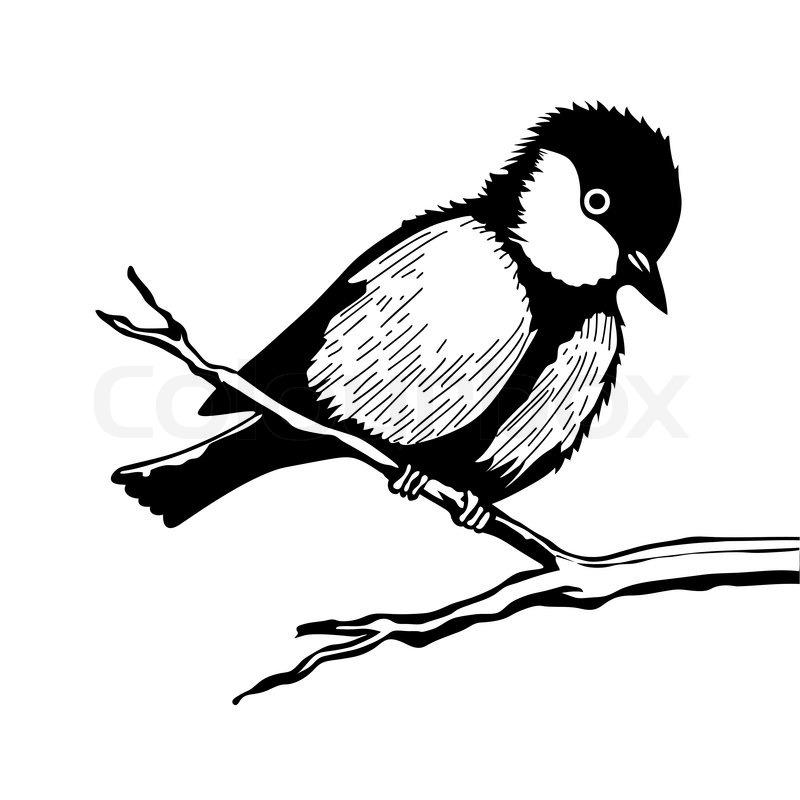 Bird on branch silhouette on white background, vector