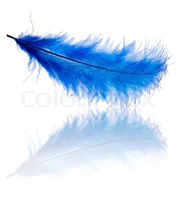 Falling Feathers Wallpaper Blue Feather Isolated On White Background Stock Photo
