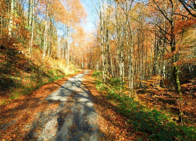 Dual Monitor Wallpaper Fall Autumn Mountain Dirty Road And Beautiful October Beech