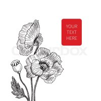 Vector line art with poppies. Black wall art. Monochrome