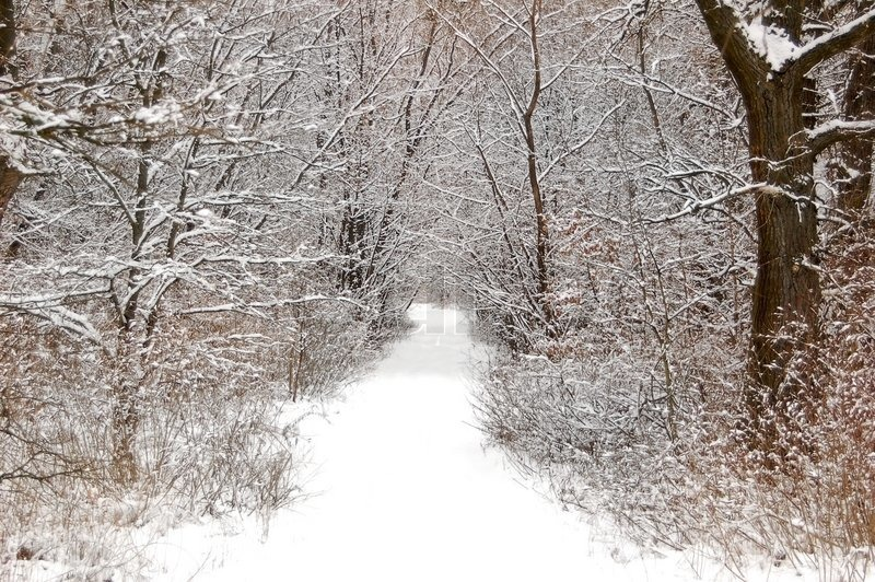 Snow Falling Video Wallpaper Pathway In The Snowy Forest At Winter Stock Photo
