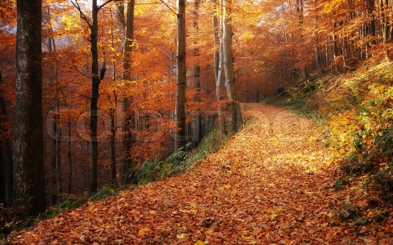 Fall Nature Scenes Wallpaper A Mountain Road Is Concealed Leaves In Stock Photo