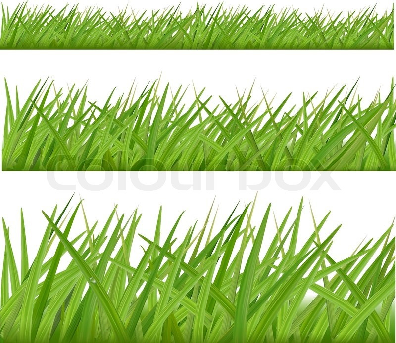 Three Grass Borders Vector Stock Vector Colourbox