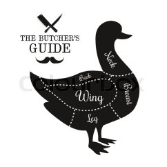 Duck Wing Diagram Chrysler Wiring Poultry Game Meat Cut Lines Stock Vector Colourbox