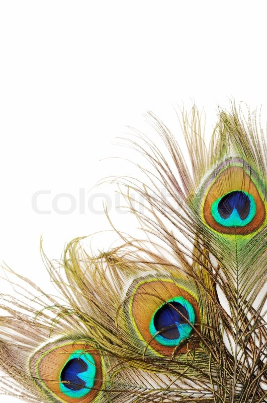 Fall Feather Wallpaper Peacock Feather Background Stock Photo Colourbox