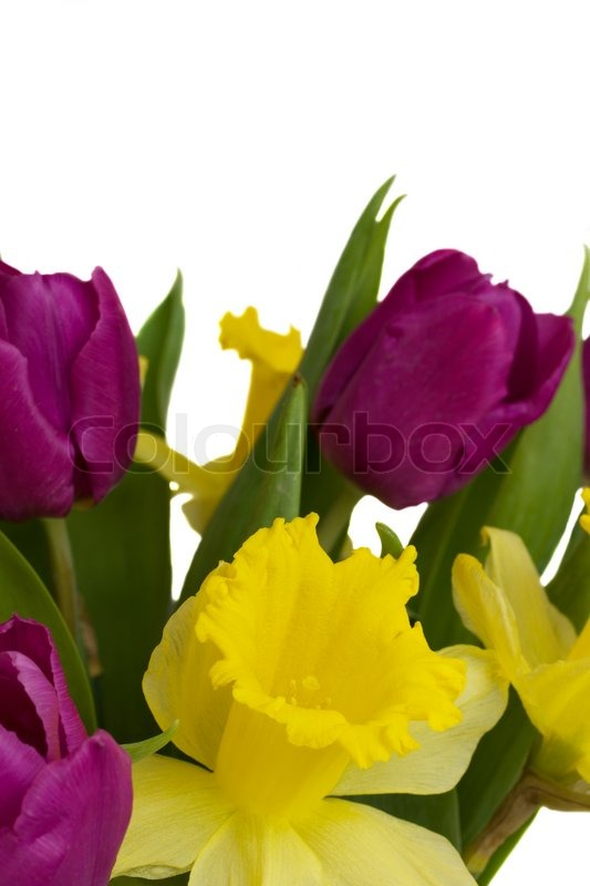 Spring Bouquet Of Tulips And Daffodils Stock Photo
