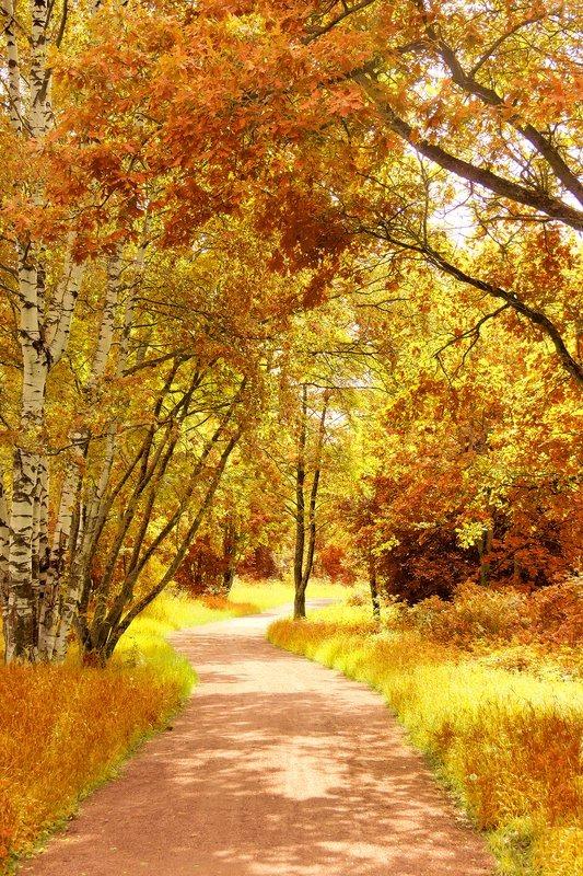 Fall Wallpaper For Windows 10 Fall Wallpaper Idyllic Nature Stock Photo Colourbox