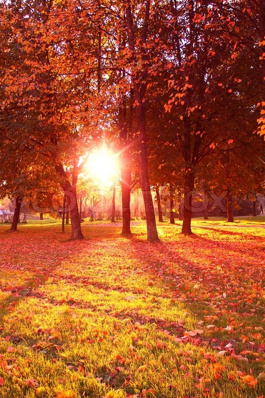 Fall Morning Sun Wallpaper Beauty In Nature Autumn Leaves Stock Photo Colourbox