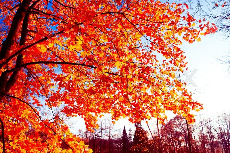 Fall Leaves Hd Wallpaper B 228 Ume 252 Ber Gelbe Herbst Wallpaper Stockfoto Colourbox