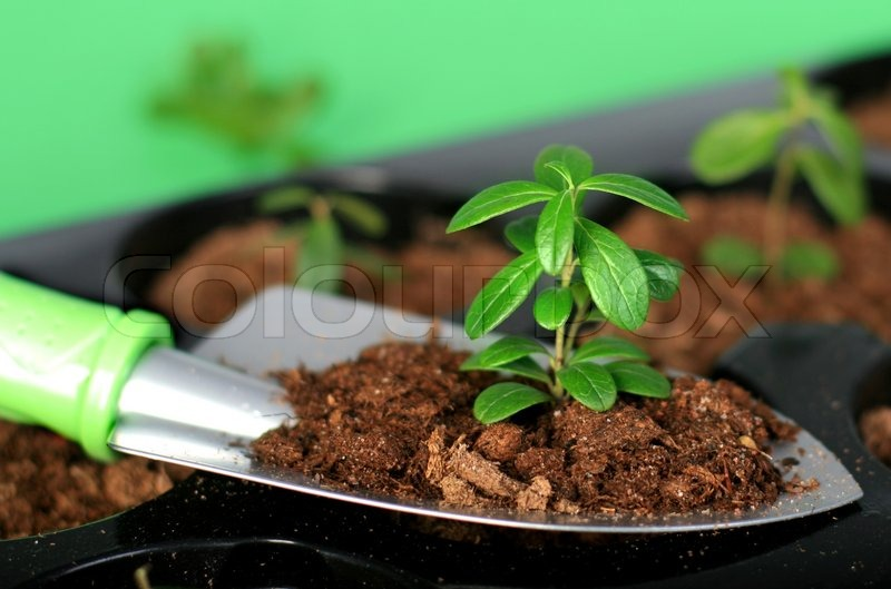 How Make Vegetable Garden Box
