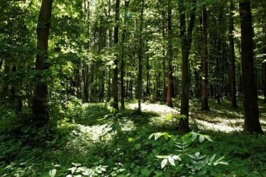 Green forest background in a sunny day Stock image Colourbox