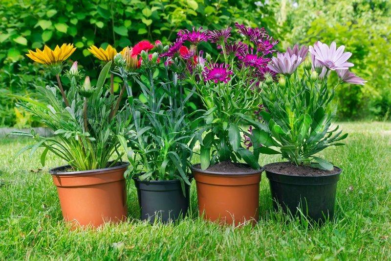 seedlings of exotic flowers