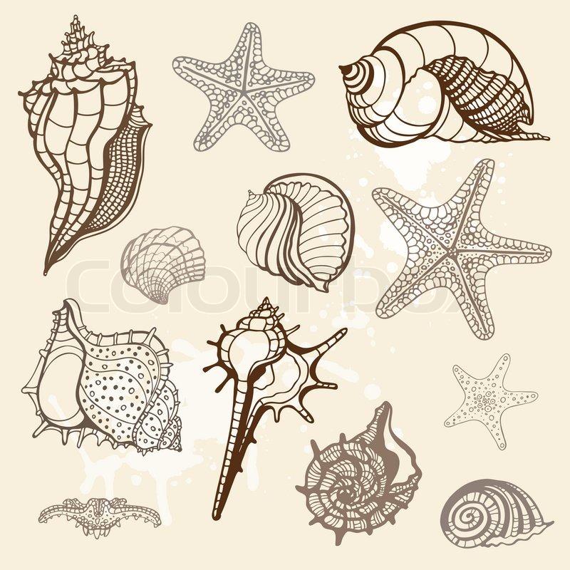 starfish sea animal line drawing