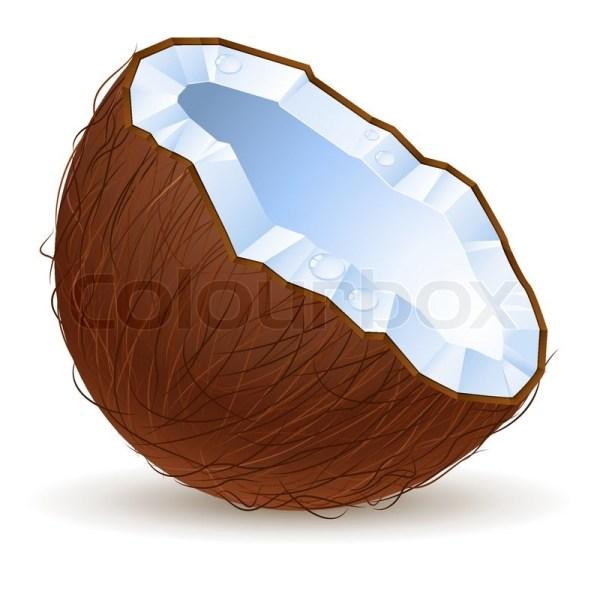 coconut stock vector
