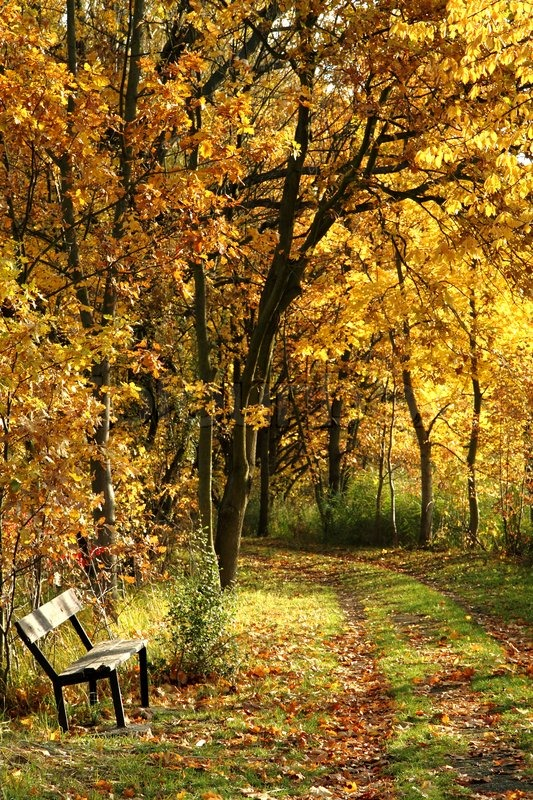 Tree With Leaves Falling Wallpaper Bench In The Autumn Park As Nice Stock Photo Colourbox