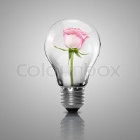 Electric light bulb and flower inside it as symbol of