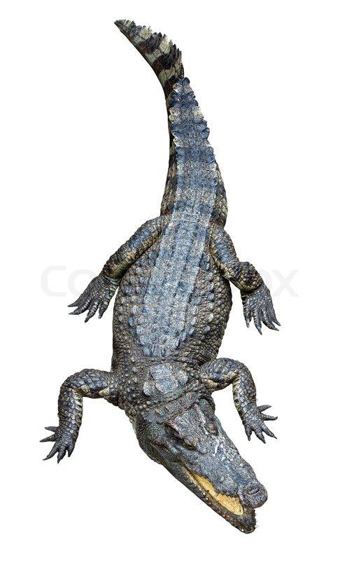 Alligator Cuisine